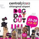 """🐶 ชวนชาวเหนือ พาน้องหมาออกมาเที่ยวแบบสุดชิค เดินชิลล์ไปด้วยกันกับงาน """"Dog Day Out"""" 🐶 📆 วันที่ 23-29 ก.ย. 63 นี้ ศูนย์การค้าเซ็นทรัล พลาซา เชียงใหม่ แอร์พอร์ต"""